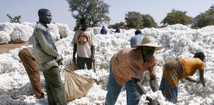 Burkina Faso : Le Coton génétiquement modifié exclut de la politique agricole