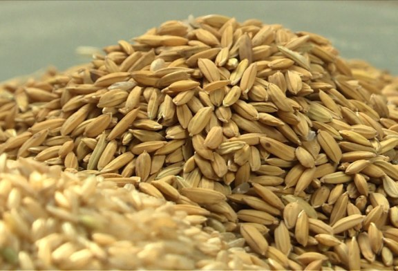 Le riz à l'épreuve de la sécurité alimentaire en Afrique de l'Ouest