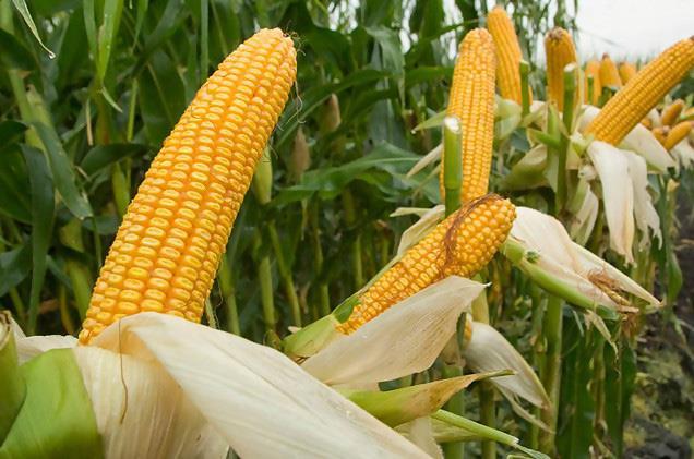 Amendement Phospho Calcique Soufré : Nouvelle Offre De La Sodeco Agri Pour La Rentabilité Des Sols